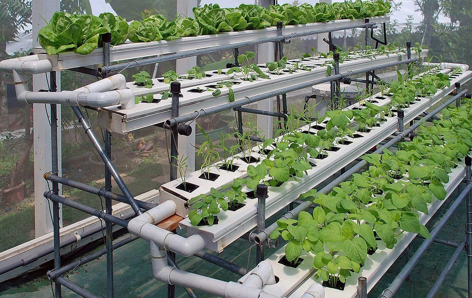 инструкция по выращиванию гидропонным методом клубники фото