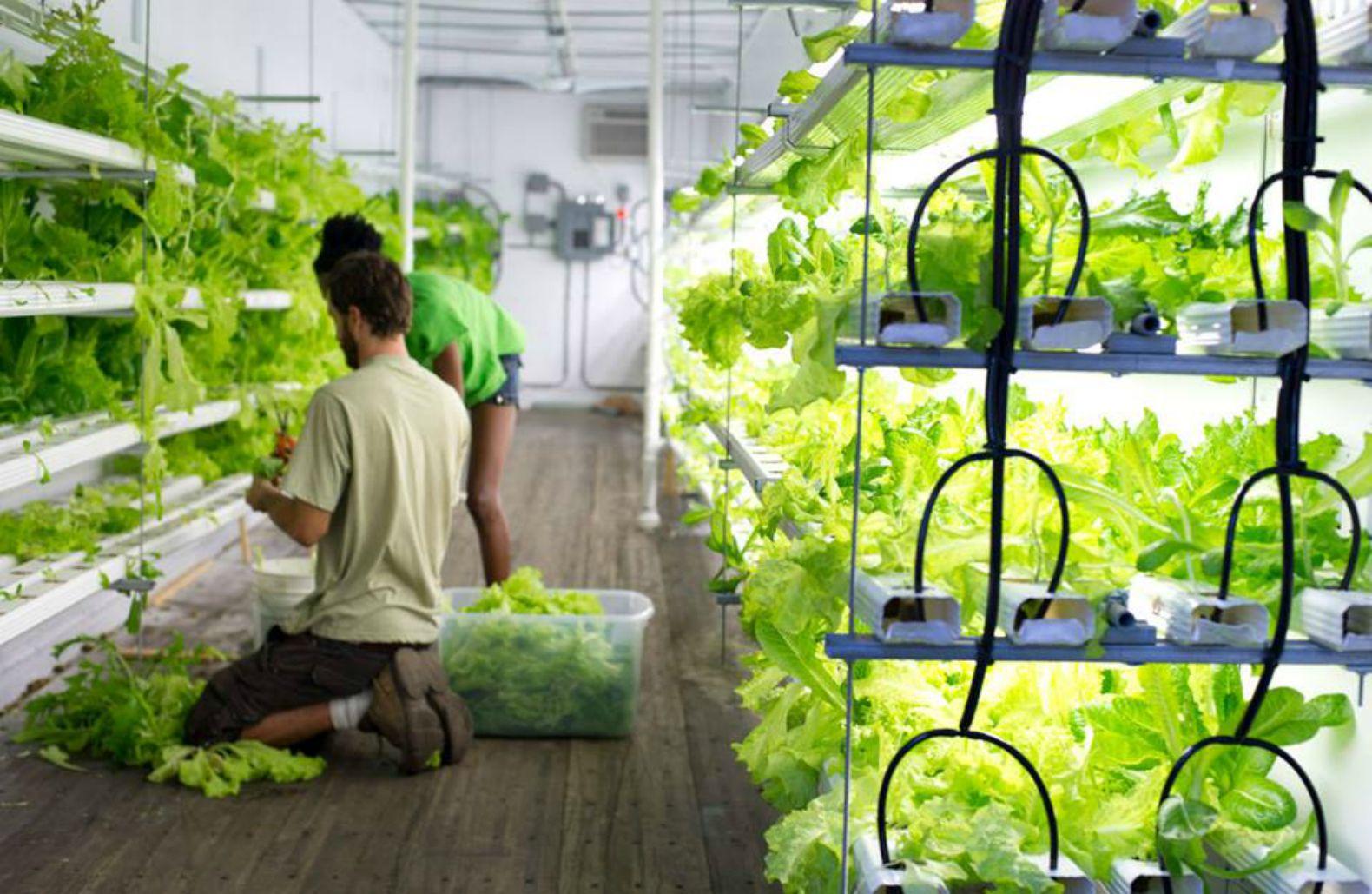 Оборудование гидропоника для выращивания зелени 76